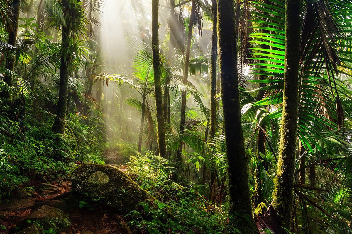 Bambulah forest
